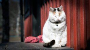 blinking-cat_1280